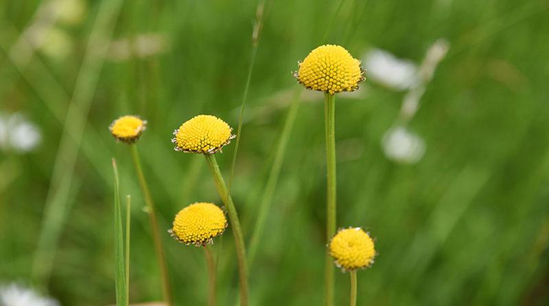 Schönheit - Nackte Blumenstiele