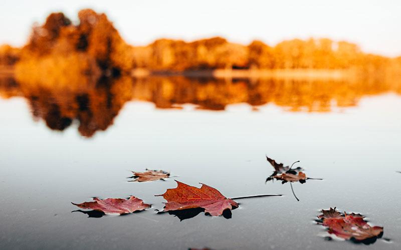 Brief an den Herbst