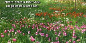 Pflanze Frieden in deiner Seele